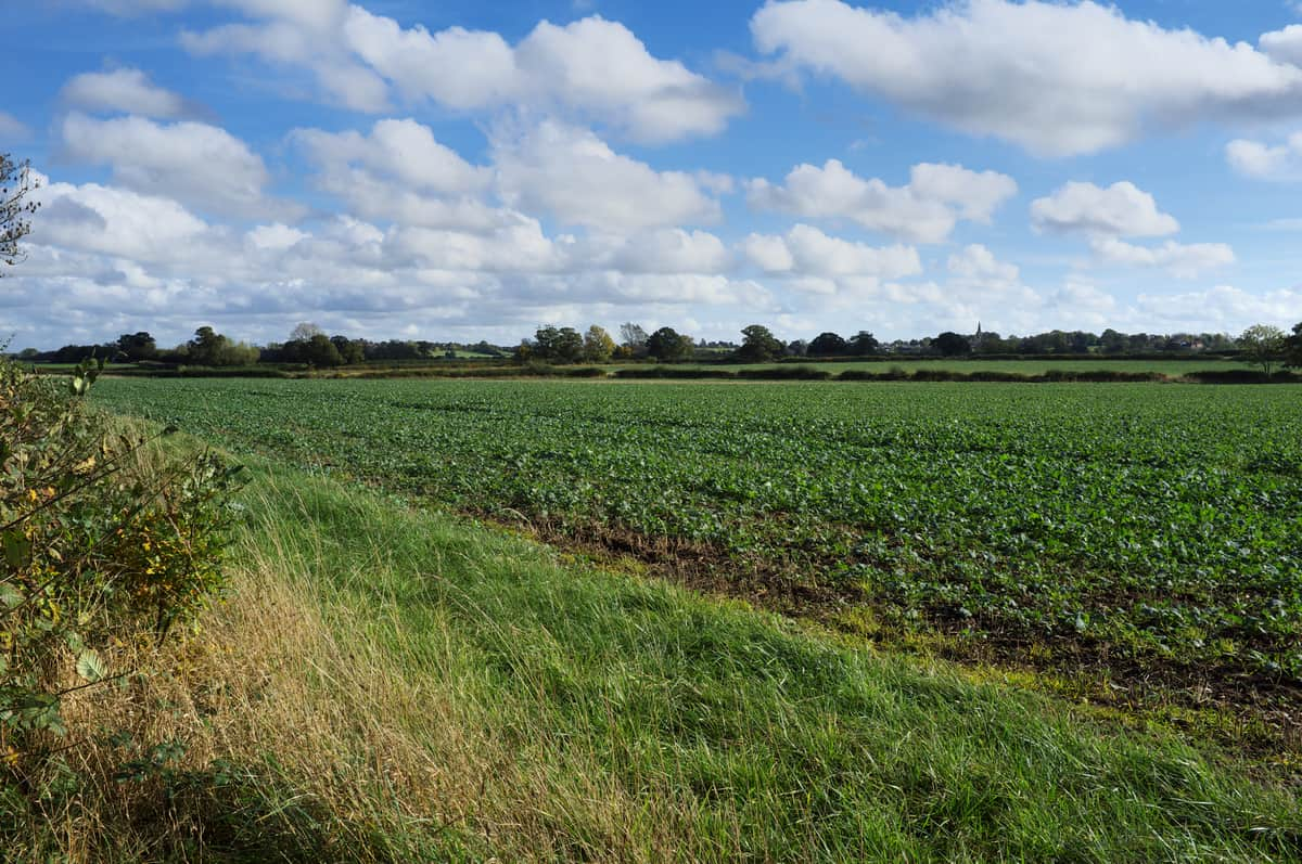 Bosworth_Battlefield_true_location