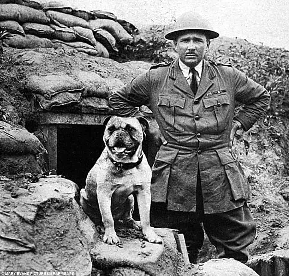 the crucial roles of animals during world war i Women in world war ii world war ii was the second of two major worldwide conflicts to take place during the first half of the 20th century the second world war, which lasted from 1938 to 1945.