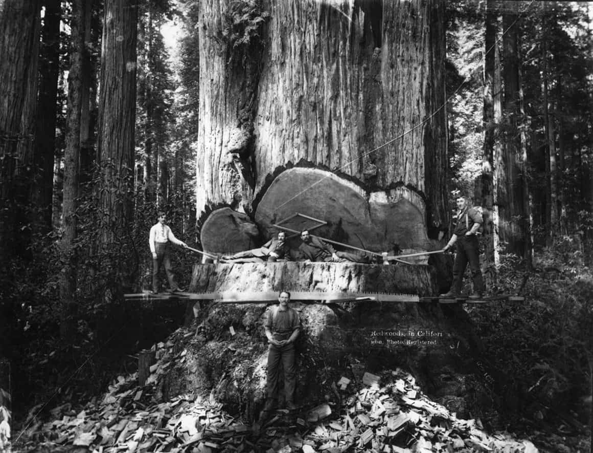 26 Photographs Of The Lumberjacks Who Conquered The