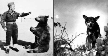 The Tragic, Unknown Lives of Animal Soldiers in WWII