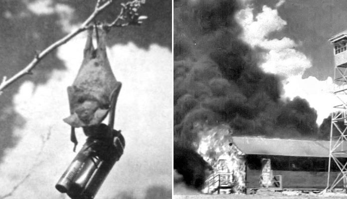 This WWII Plan Consisted of Incinerating Japan With Bats Bearing Tiny Bombs